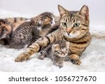 mom  mother  cat and baby cat ... | Shutterstock . vector #1056727670