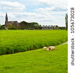Sheep Grazing Outskirts Of...
