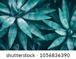 tropical leaves  blue toned | Shutterstock . vector #1056836390
