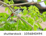the red whiskered bulbul or... | Shutterstock . vector #1056840494