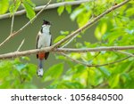 the red whiskered bulbul or... | Shutterstock . vector #1056840500