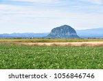 scenery of potato farm field... | Shutterstock . vector #1056846746