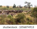 herd of herbivores on the hige...   Shutterstock . vector #1056874913