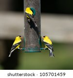 Goldfinch At A Thistle Feeder