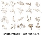 handdrawn flower and branches... | Shutterstock .eps vector #1057054376