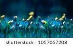floral summer spring background.... | Shutterstock . vector #1057057208