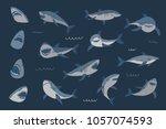 vector shark sea animal wild...   Shutterstock .eps vector #1057074593