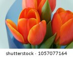 Small photo of Big orange tulips Ad Rem in bouquet