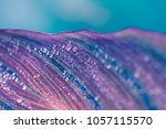 closeup shot of a leaf with... | Shutterstock . vector #1057115570