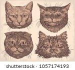 cat portraits. design set. hand ... | Shutterstock .eps vector #1057174193