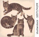 Cats. Design Set. Hand Drawn...