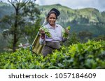 sri lanka  hatton  march 8 ... | Shutterstock . vector #1057184609