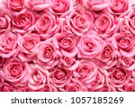 Stock photo gift of pink rose on pink background 1057185269