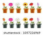 different types of flowers in... | Shutterstock . vector #1057226969