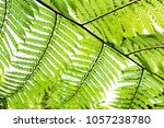 fresh green leaves and... | Shutterstock . vector #1057238780