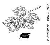 hawthorn branch drawing. vector ... | Shutterstock .eps vector #1057267586