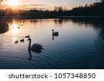Family Of Swans At Sunset....