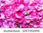 Beautiful Pink Rose Petals....