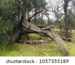 Dead Tree Art