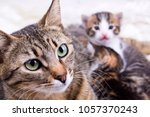 Stock photo mom cat mother cat and baby cat kitten 1057370243