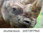 close up of a rhino | Shutterstock . vector #1057397963