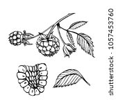 hand drawn raspberry set... | Shutterstock .eps vector #1057453760