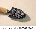coffee beans in spoon | Shutterstock . vector #1057472246