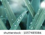 fresh green grass with dew... | Shutterstock . vector #1057485086
