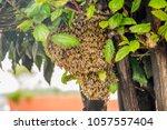 outdoor view of bee angles... | Shutterstock . vector #1057557404