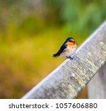 a dainty delightful  little... | Shutterstock . vector #1057606880