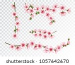 chinese cherry branches set... | Shutterstock .eps vector #1057642670