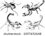 vector drawings sketches... | Shutterstock .eps vector #1057652648