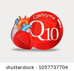 coenzyme q10 and heart....   Shutterstock .eps vector #1057737704