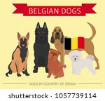 dogs by country of origin.... | Shutterstock .eps vector #1057739114