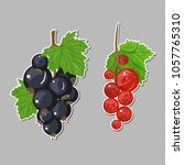 vector set of black currant red ...   Shutterstock .eps vector #1057765310