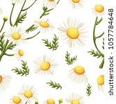 seamless pattern of chamomile... | Shutterstock .eps vector #1057784648