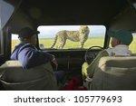 January 2005   Cheetah Jumping...
