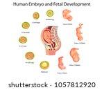 education chart of biology for... | Shutterstock .eps vector #1057812920