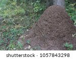 a large anthill in a sunny... | Shutterstock . vector #1057843298
