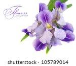 A Beautiful Blue Iris Flower O...