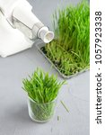 Small photo of Extraction of Wheatgrass on the kitchen, copy space, gray background