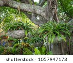 corner of green with tropical... | Shutterstock . vector #1057947173