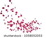 the petals of a red rose fly... | Shutterstock . vector #1058052053