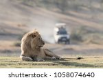 Male Lion Lying On Grass With ...