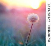autumn scene.fluffy flower...   Shutterstock . vector #1058076539