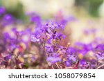 purple lilac flowers at the... | Shutterstock . vector #1058079854