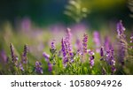 ladybugs and bees pollinate... | Shutterstock . vector #1058094926