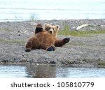 An Alaskan Brown Bear Resting...