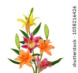 beautiful lily flower isolated... | Shutterstock . vector #1058216426