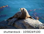 a seal catches the last of the... | Shutterstock . vector #1058269100